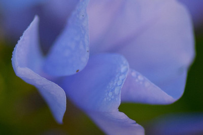 flowers-7128