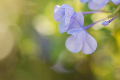 flowers-7123