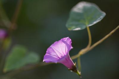 flowers-7169