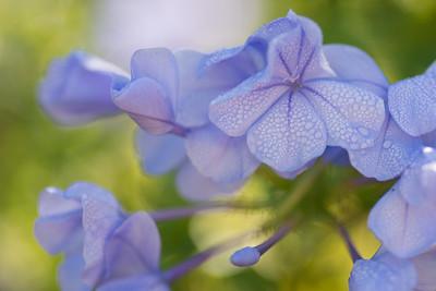 flowers-7119