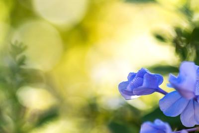 flowers-7151