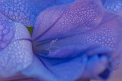 flowers-7126