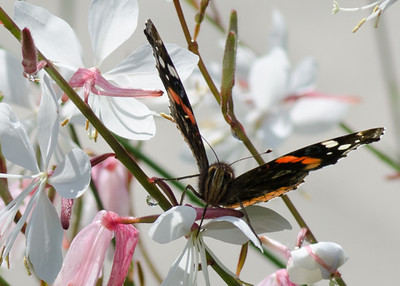 butterfly-8392