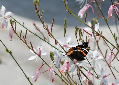 butterfly-8388