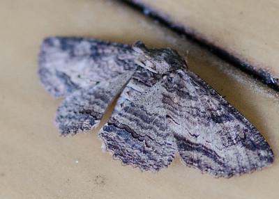 butterfly-8352