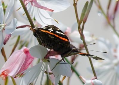 butterfly-8379