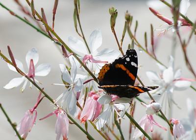 butterfly-8385