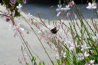 butterfly-8382