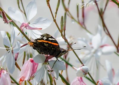 butterfly-8380