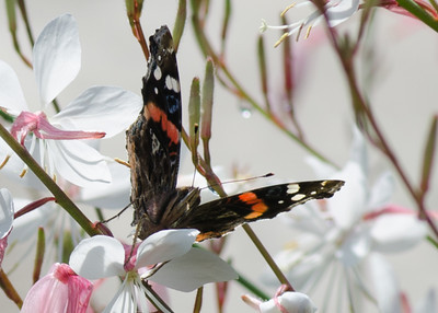 butterfly-8391