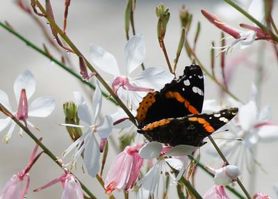 butterfly-8387