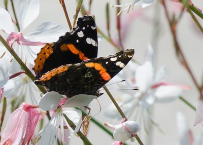 butterfly-8386
