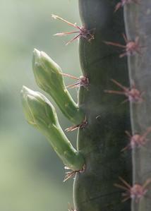 cactus-6299