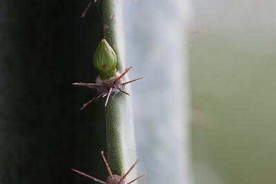 cactus-6421