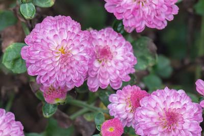 flowers-6540