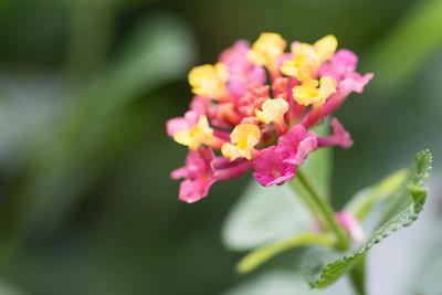 flowers-6512
