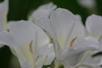 flowers-6551