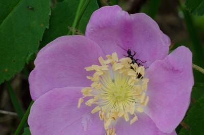 flowers-3865