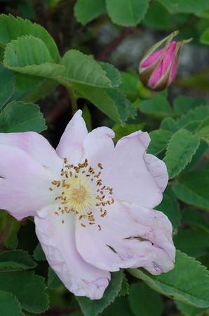 flowers-3845