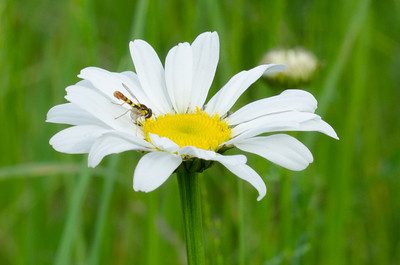 flowers-3852