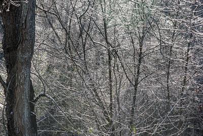 snow_day-9600