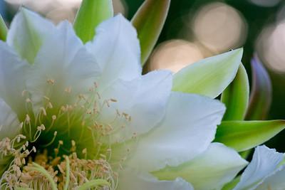 cactus-6849