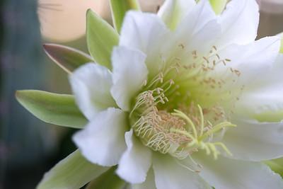 cactus-6840