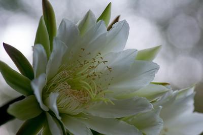 cactus-6709