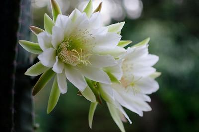 cactus-6137