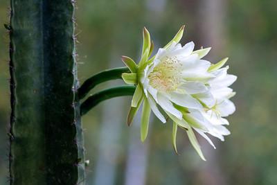 cactus-6743