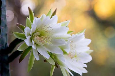 cactus-6876