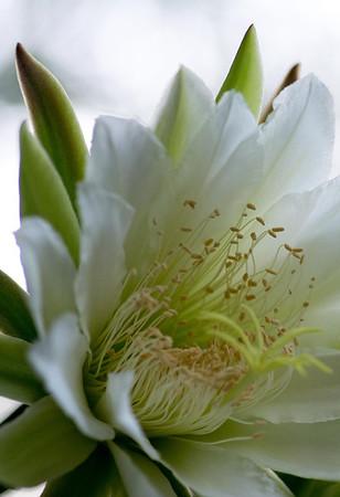 cactus-6707