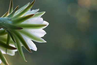 cactus-7022