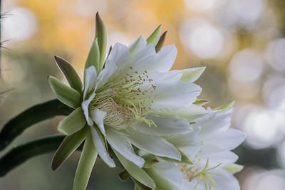 cactus-6824
