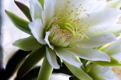 cactus-6817