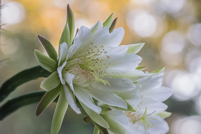cactus-6825