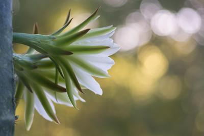 cactus-7044