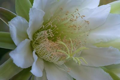 cactus-6863