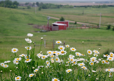 prairie_flowers 048