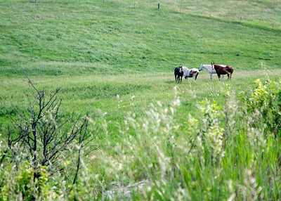 prairie_flowers 095