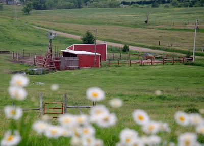 prairie_flowers 049
