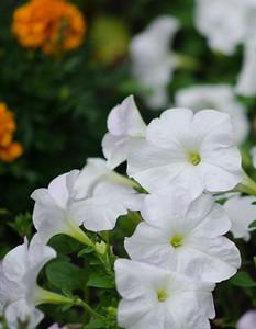 garden-4327