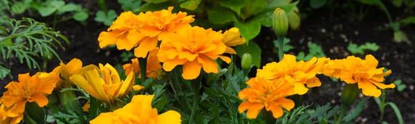 garden-4230