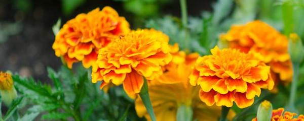 garden-4291