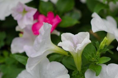 garden-4317