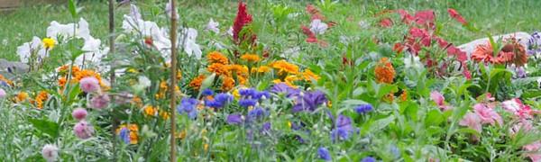 garden-4235