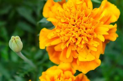 garden-4290
