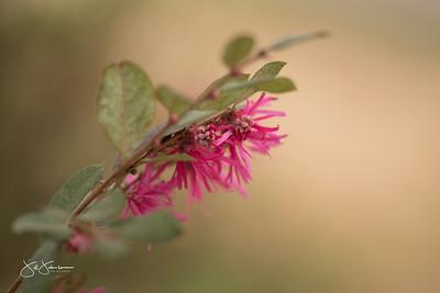 spring_flowers-3137