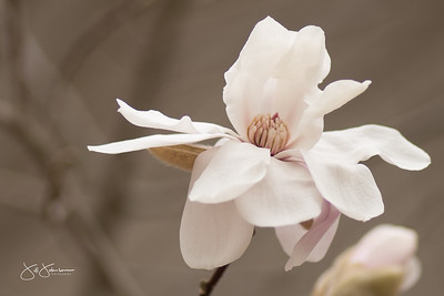 spring_flowers-3111