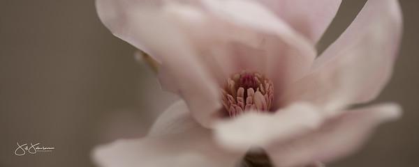 spring_flowers-3200